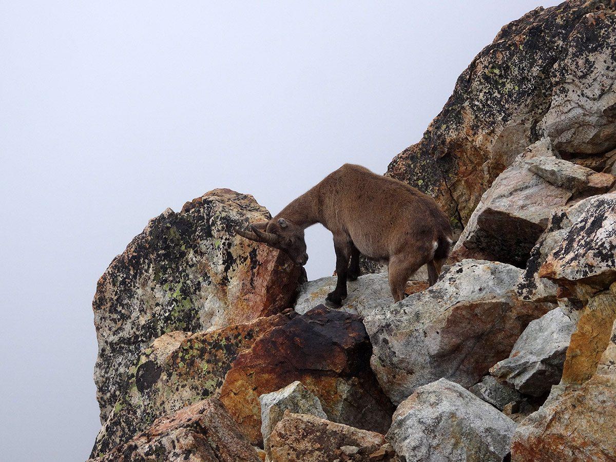 Altri alpinisti