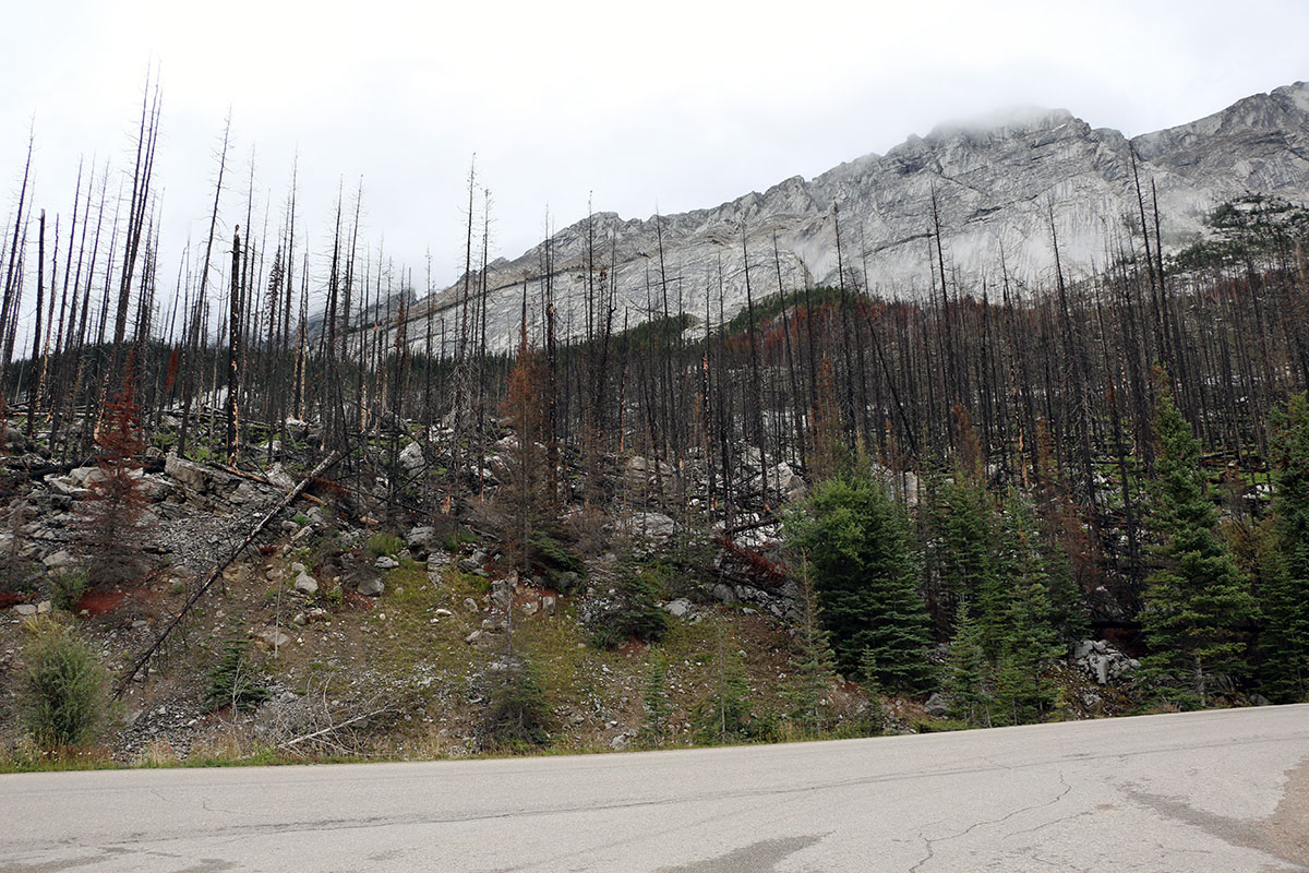 Parte dell'incendio del Medicine Lake